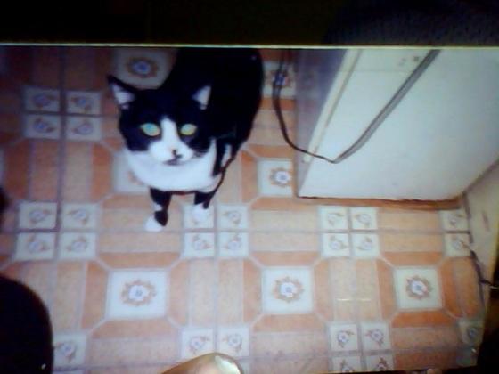 T.L.C. my Cat