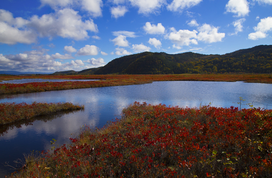 Autumn on the Bog
