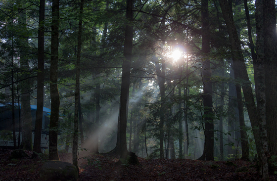 Sunset through the trees - Paradox Lake Campground, Paradox, NY