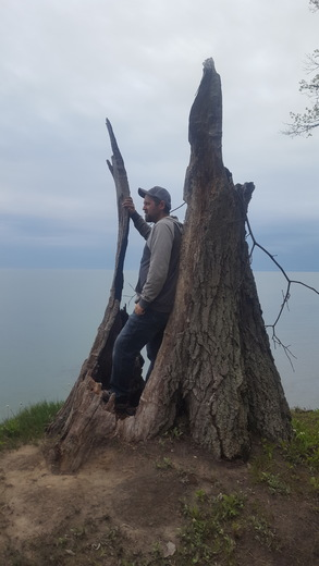 Hollow Tree on the Bluffs