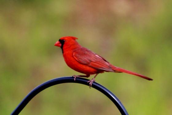 birds, 6-5-2017