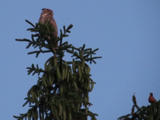 Robin wants owl to go away!