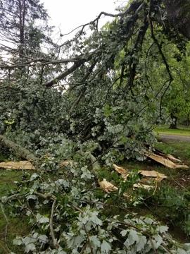 Tree damage 6 14 17 Walhalla SC