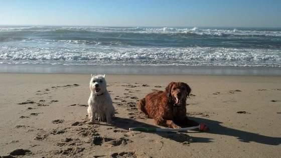Murphy and Sam