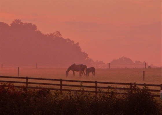 sunrise in the pasture