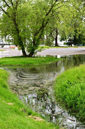 Flooding turtle pond Belleville Belleville, ON