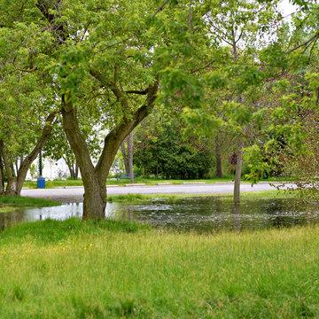 Flooding turtle pond Belleville