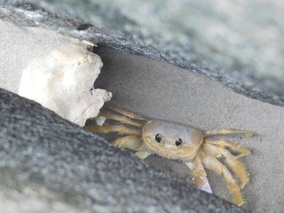 Feelin crabby?