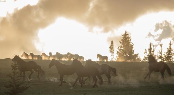 Pryor Mountains Wild Horse Range