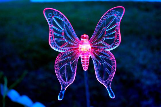 Butterfly llights