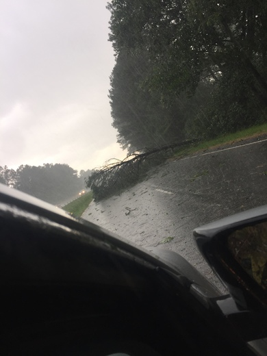 Tree down on 123
