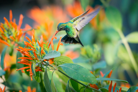 Wildlife Category Winner - Boyce Thompson Arboretum State Park
