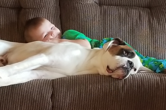Just a boy and a Boxer.