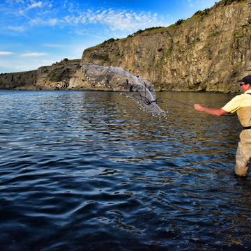Throwing The Net For Capelin
