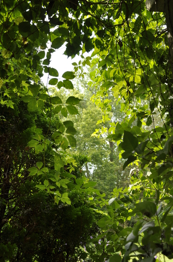Summer's Greens