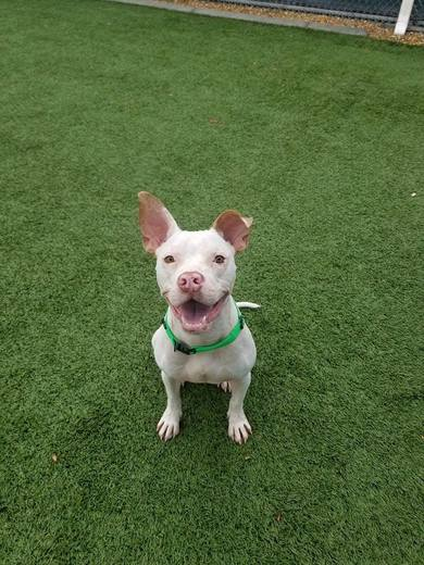 Rocky, 2yo superstar who loves to smile!