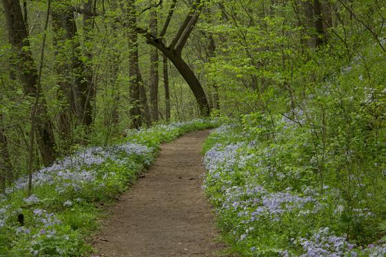 wild flower trail