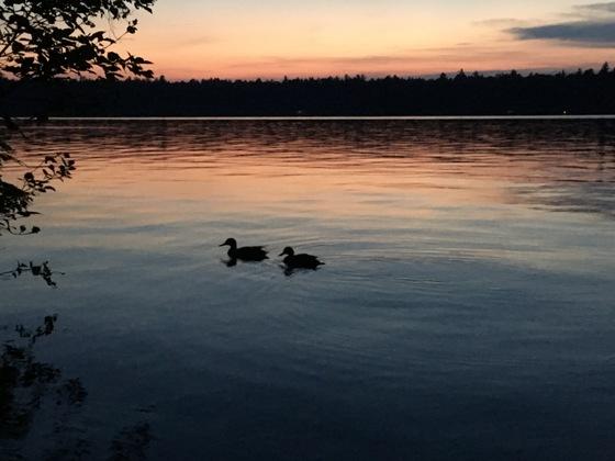 ducks on Fish Creek Pond