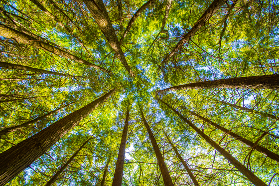 Looking Up in the Forests