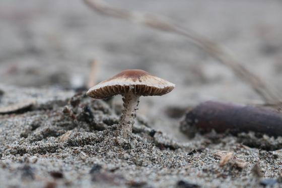 Sand Mushroom 2