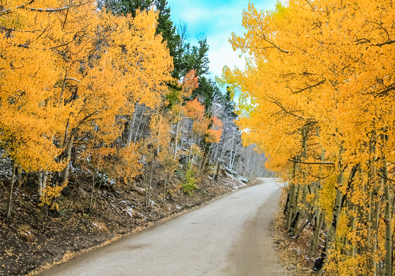 Arapahoe National Forest