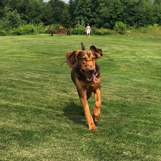 Summer Shenanigans with Bloodhound