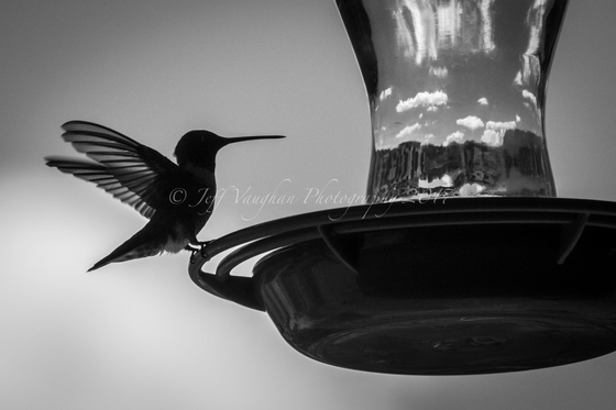 Hummer @ #4 - Placitas, NM