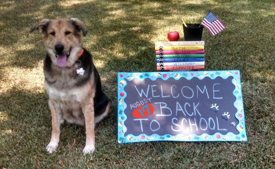 Welcome Back to School Callie !