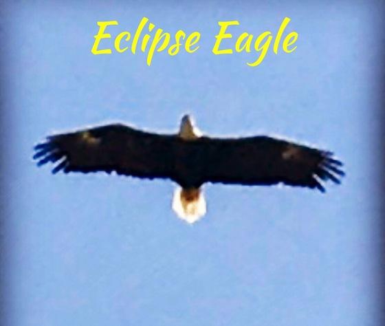 Eclipse Eagle