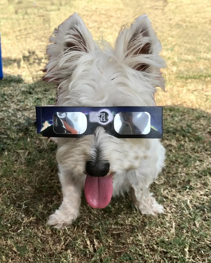dory_the_westie at eclipse 2017