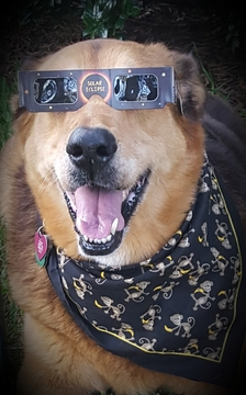 Callie has been Totality Solar Eclipsed