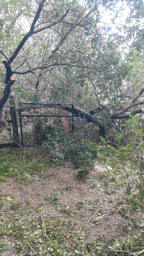 Kudos to the Marion County Sheriff's Office. Tree fell in our bucks goat pen.