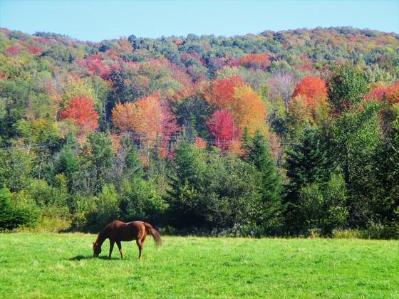 Fall Colors & Horse