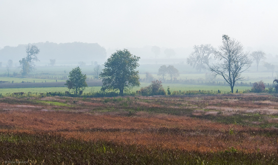 Morning Magic