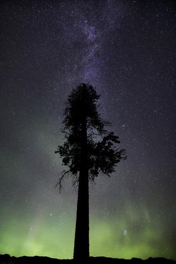 Galactic Aurora