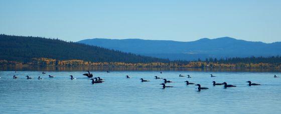Loony Lake