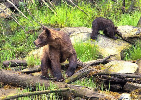 Mom Calling Second Cub...