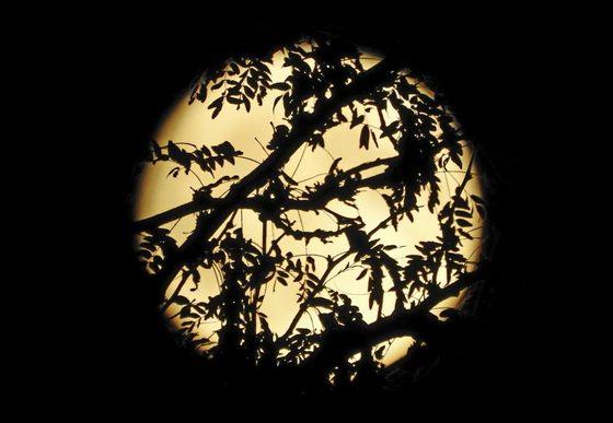 Tonight's Partial Moon