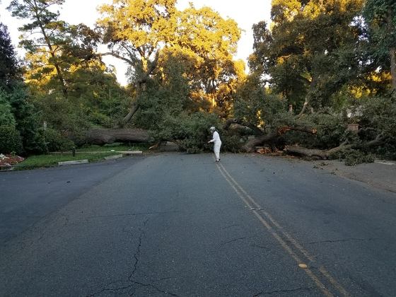 Fallen tree Stockton Ca