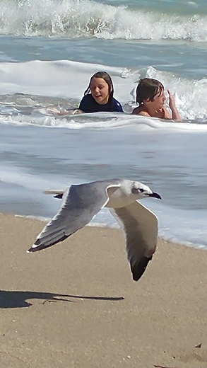 Taking photo of my son photo bombed by seagull at Jensen Beach today..