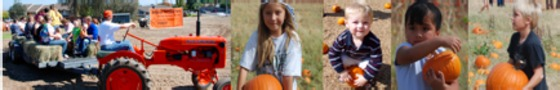 Help share the word - 6,000 FREE pumpkins for kids!