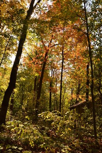 Autumn at Camp