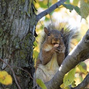 A Little Squirrely...