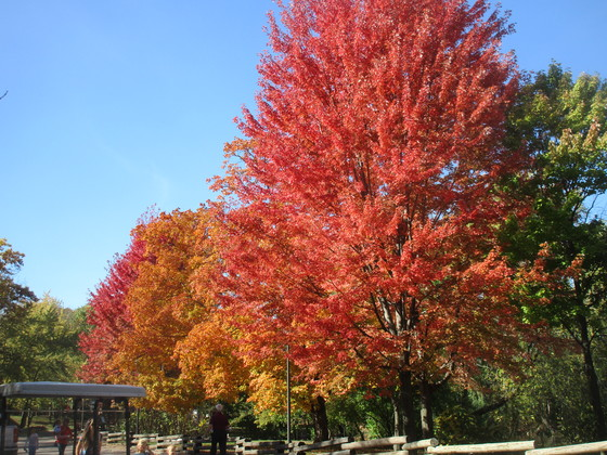 Color at the zoo on Oct. 20, 2017