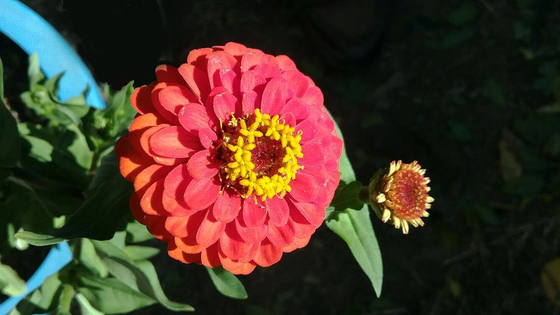 From my garden