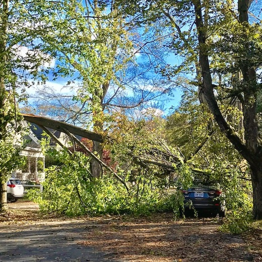 Storm Damage , Andover , Ma