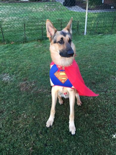SuperDog Halloween Costume