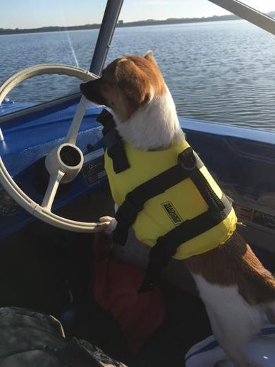Captain Fox