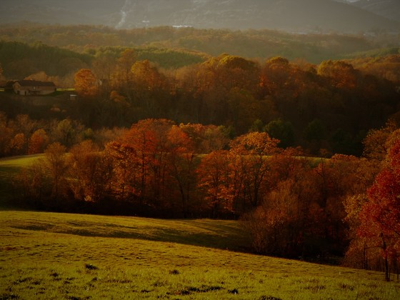 Few last shots of fall in Alleghany county