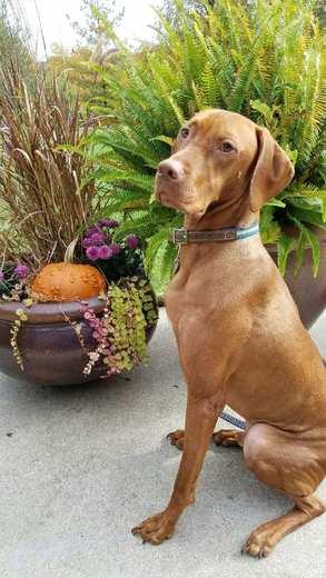 Fall dog photo